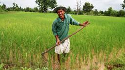 Profumo di riso