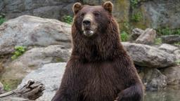 L'orso Bouba