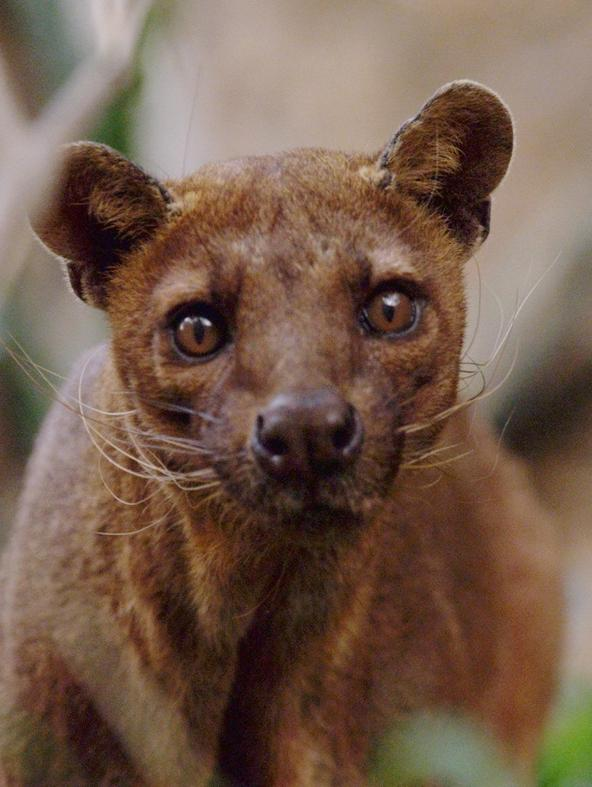 S1 Ep2 - Madagascar: creature bizzarre