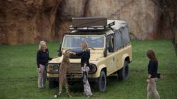Tre cuccioli di ghepardo