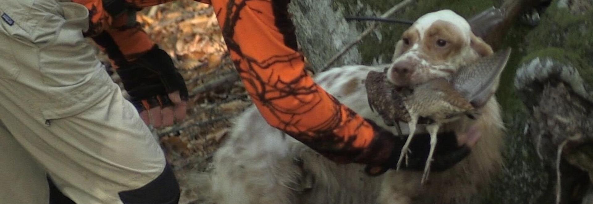 Le beccacce dei vichinghi. 1a parte