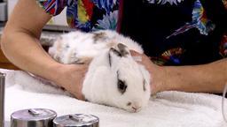 Nella tana del coniglio