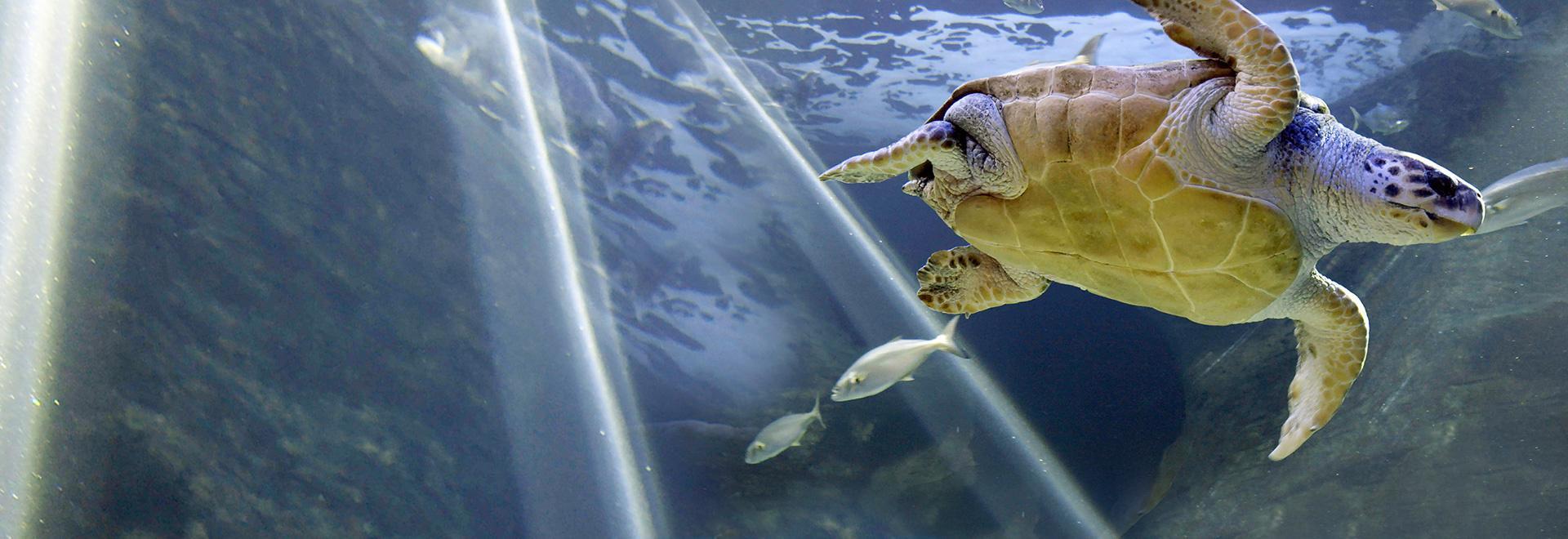 Aquarium: An Aquatic Life