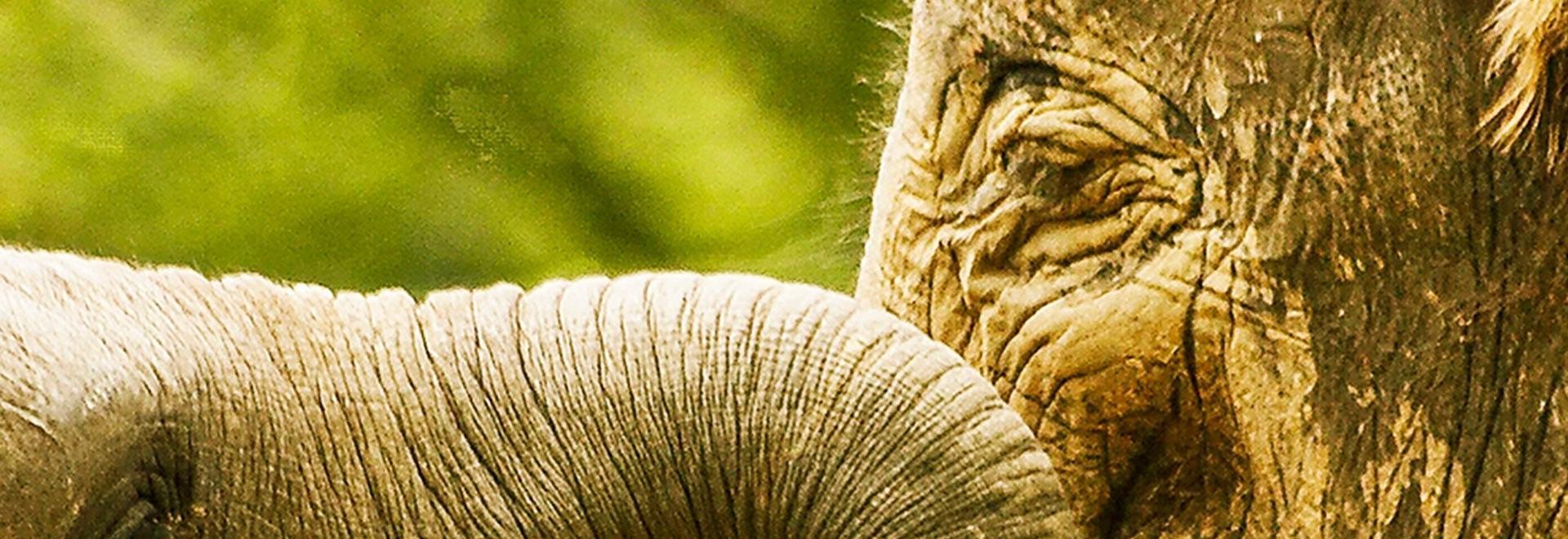 L'ospedale degli elefanti