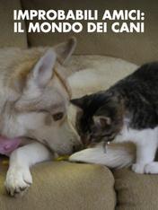 S1 Ep2 - Improbabili amici: il mondo dei cani