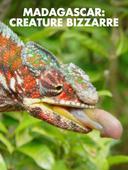 Madagascar: creature bizzarre