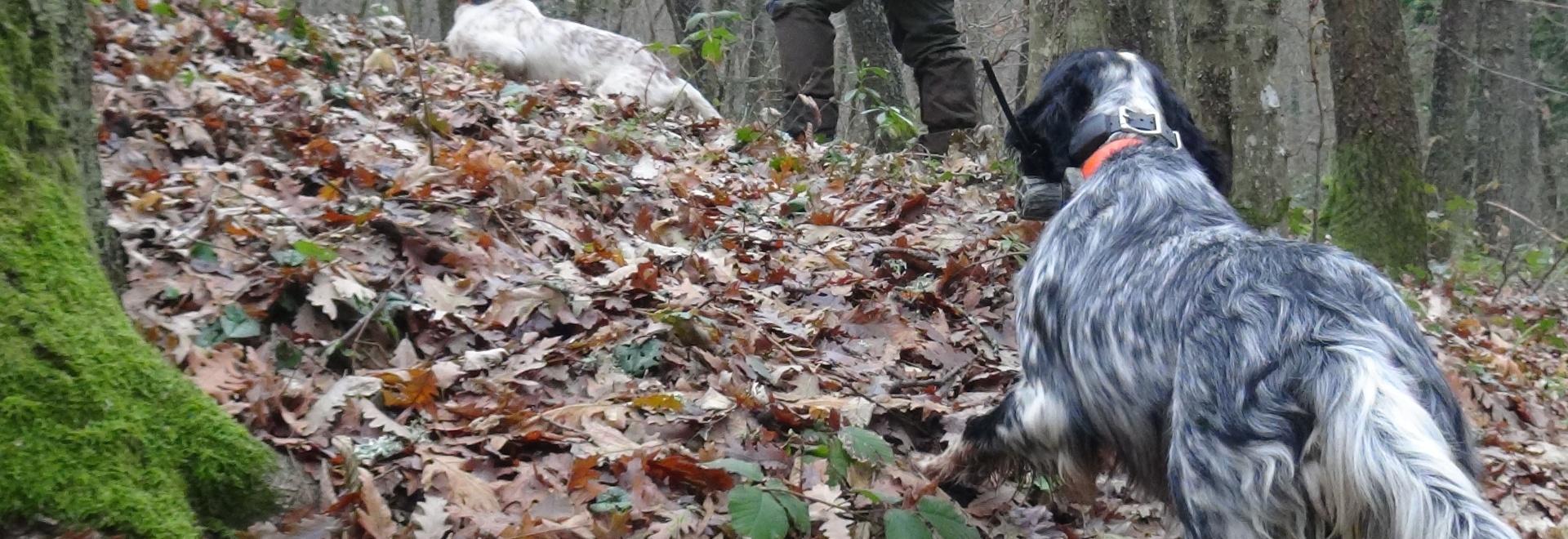 Addestrando cacciando