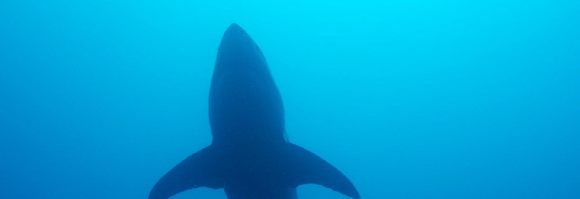L'isola degli squali fantasma