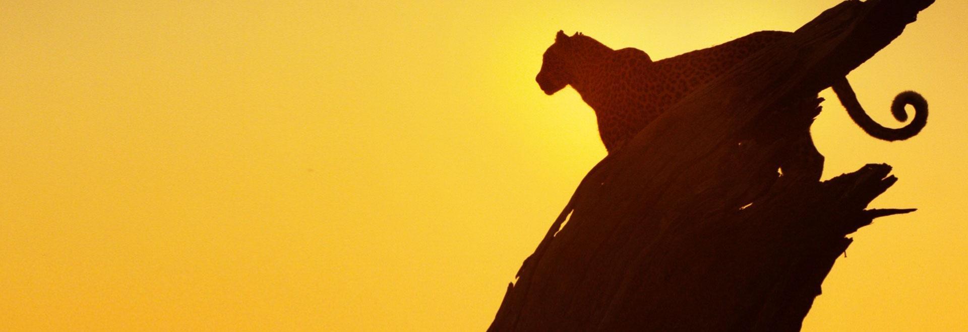 La fortezza del leopardo