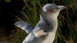 Il piccolo pinguino