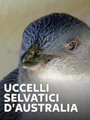S1 Ep1 - Uccelli selvatici d'Australia