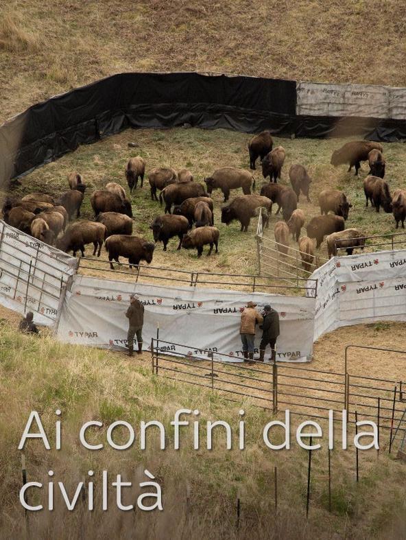 Il bestiame
