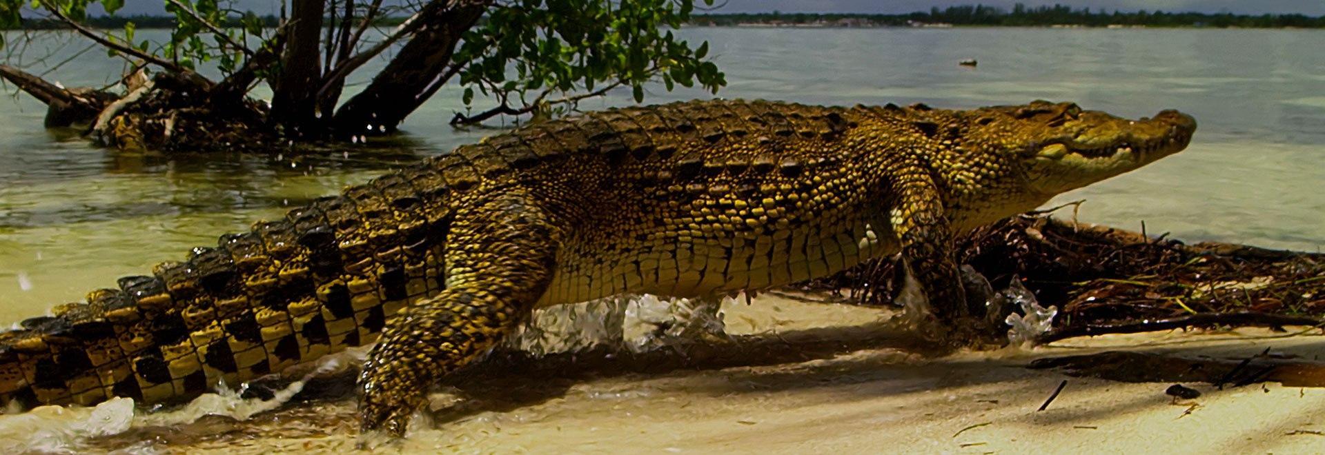 Wild Caraibi