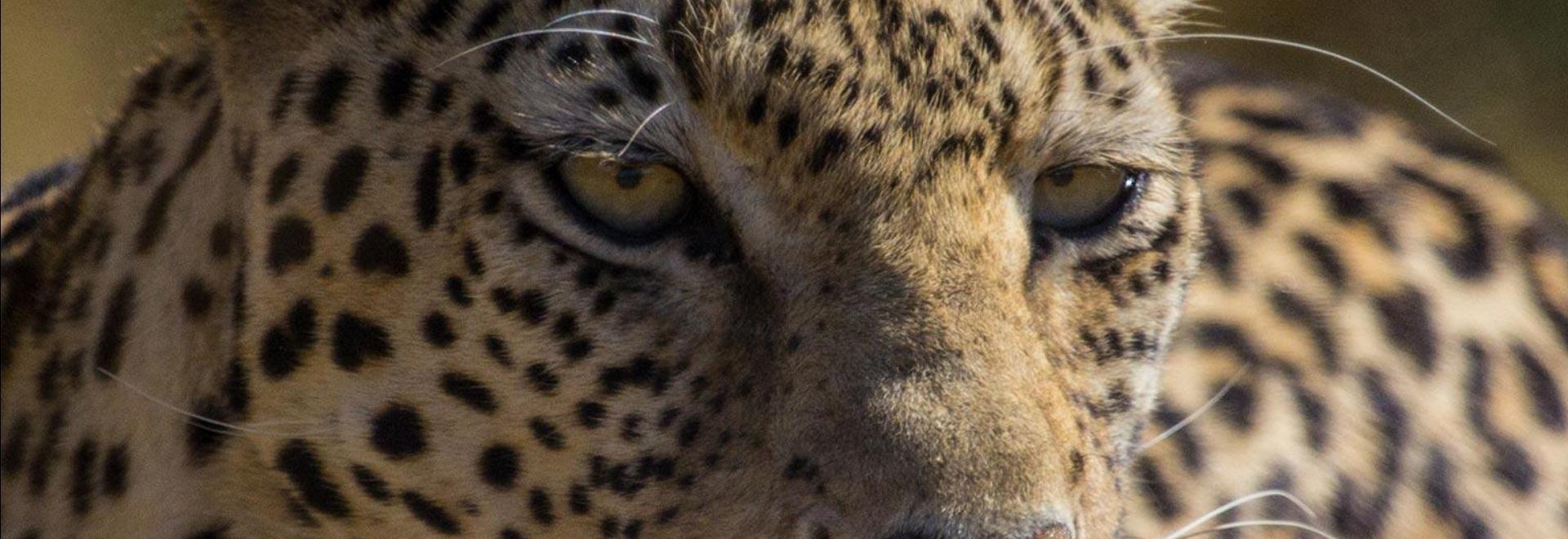 Animal Fight Club: Africa