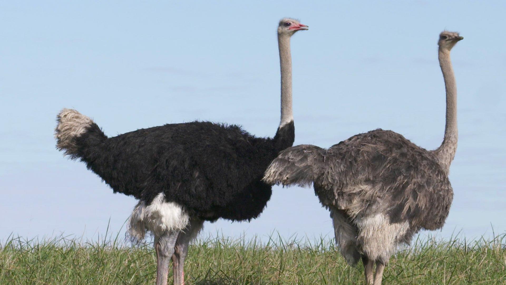 NatGeo Wild HD L'oasi degli animali: casi esotici