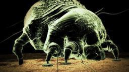 I batteri mangia-carne