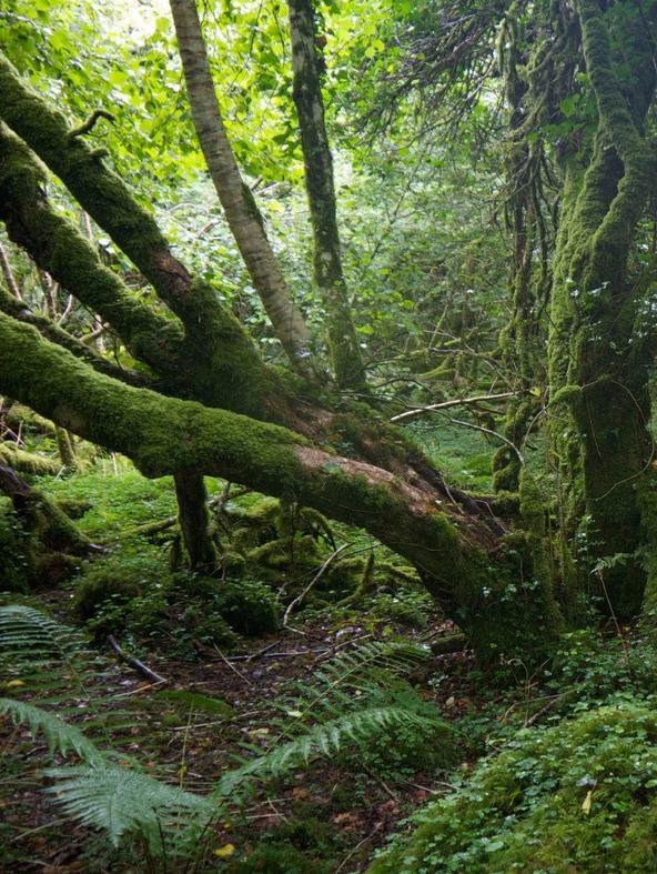Il richiamo della foresta - La saggezza degli alberi
