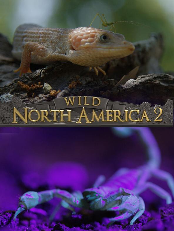 Wild North America