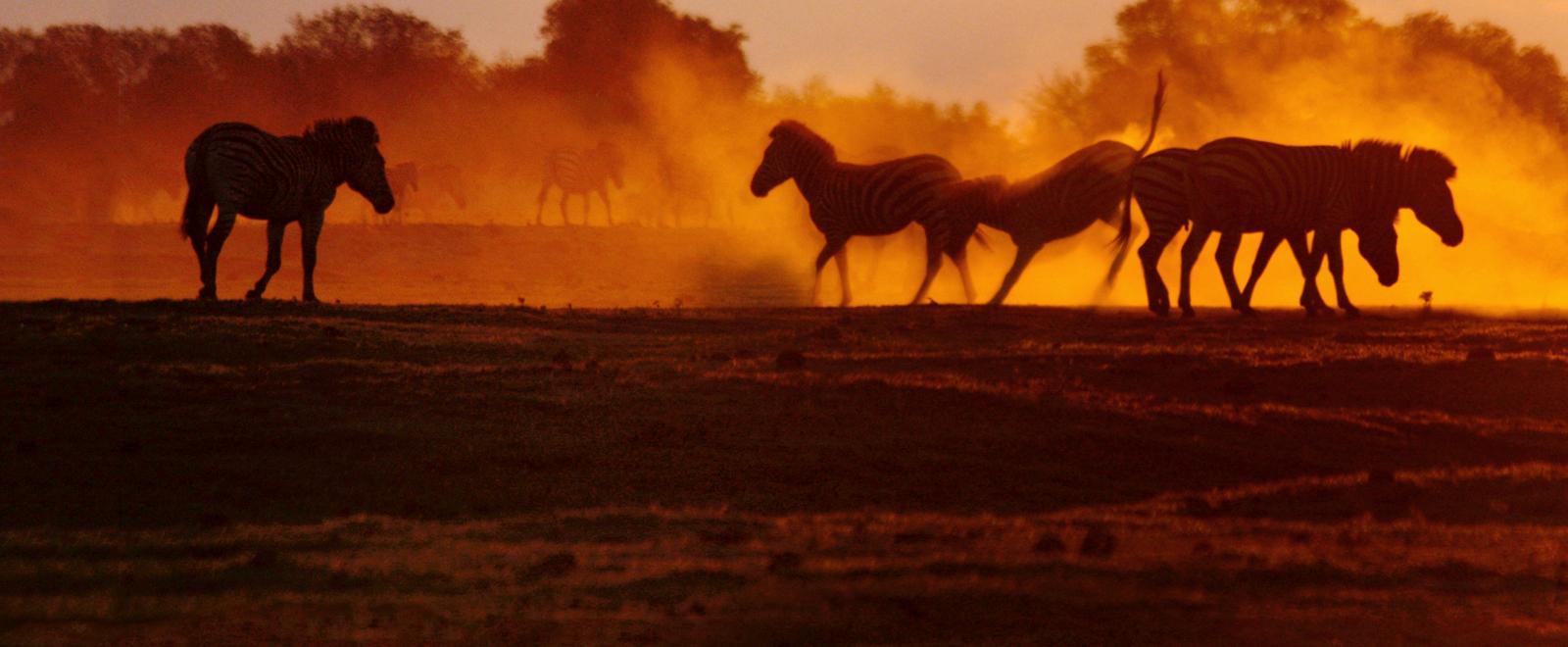 Le grandi migrazioni della natura