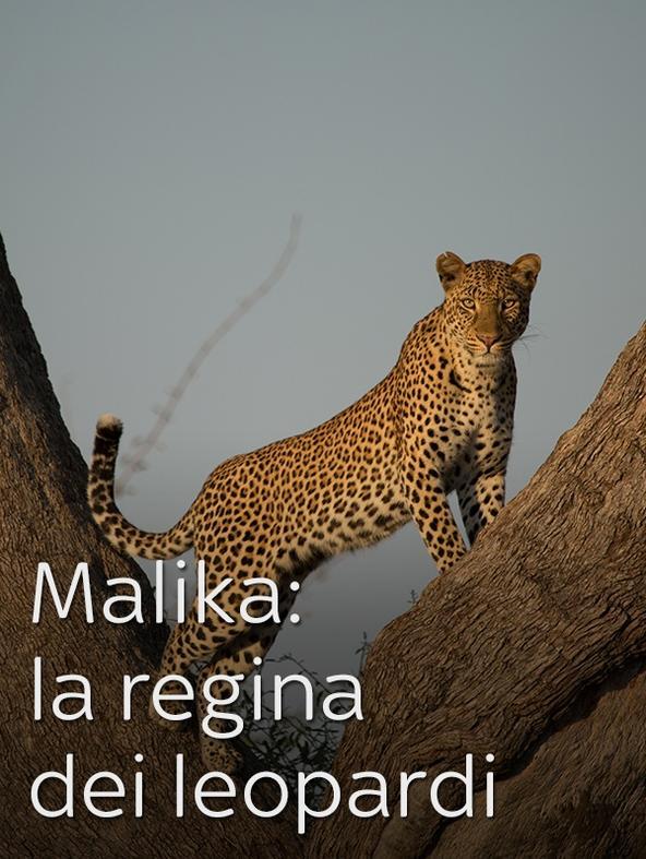 World Leopard Day -  -