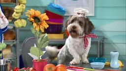 L'occasione di Chef Pup