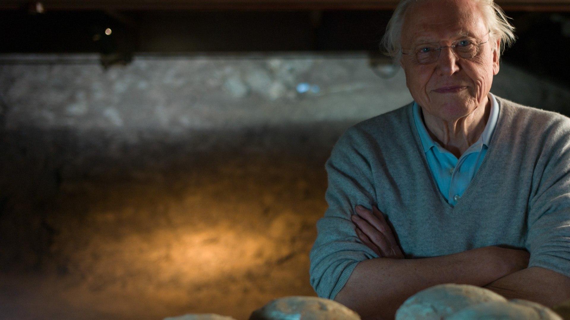 Sky Nature HD David Attenborough - L'evoluzione degli animali