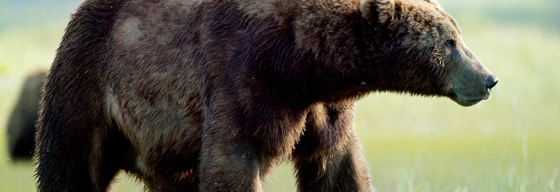 Il regno degli orsi