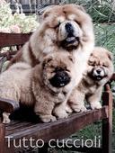 Tutto cuccioli
