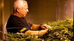 Un carico di marijuana