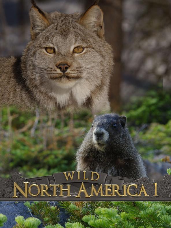 S1 Ep1 - Wild Nord America