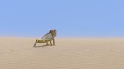Namibia: terra degli estremi