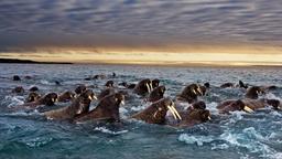 Il regno delle orche