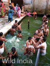 S1 Ep2 - Wild India
