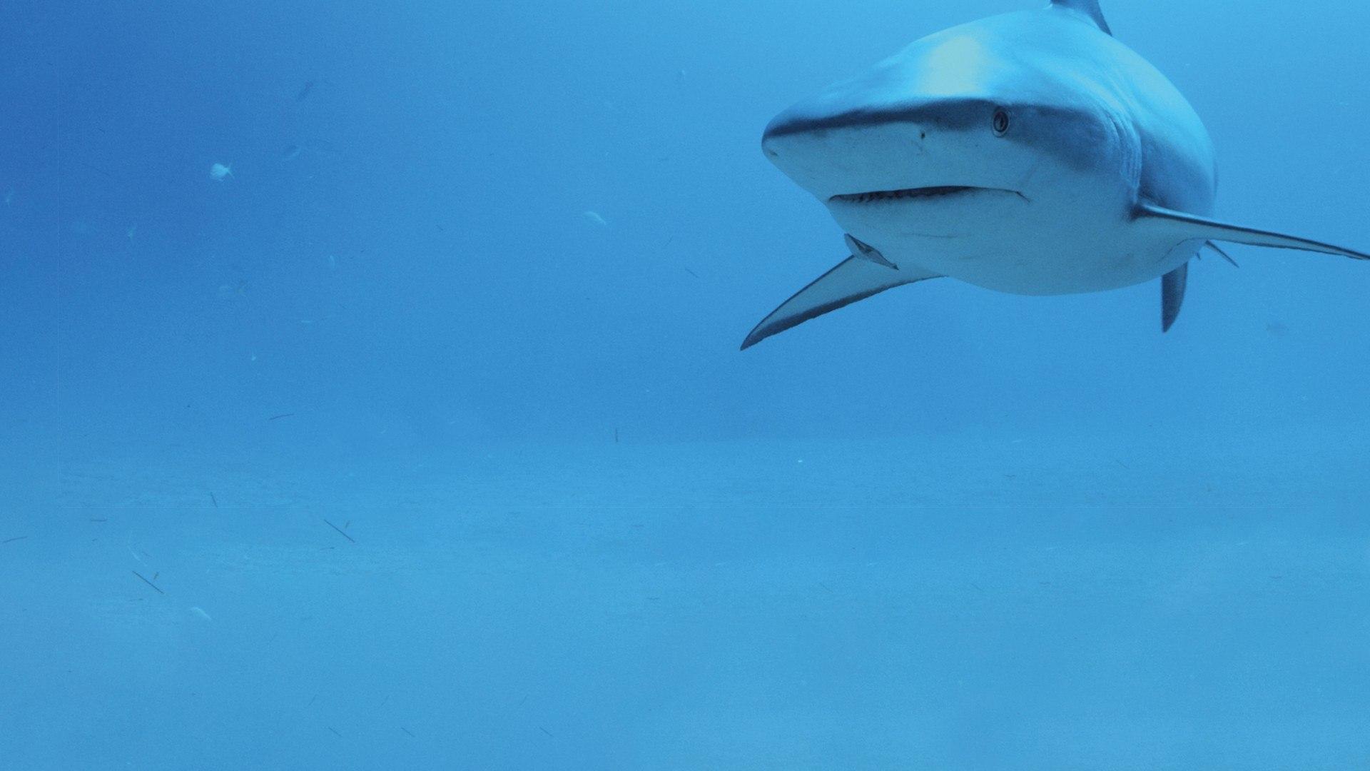 Sky Nature HD Lo squadrone degli squali
