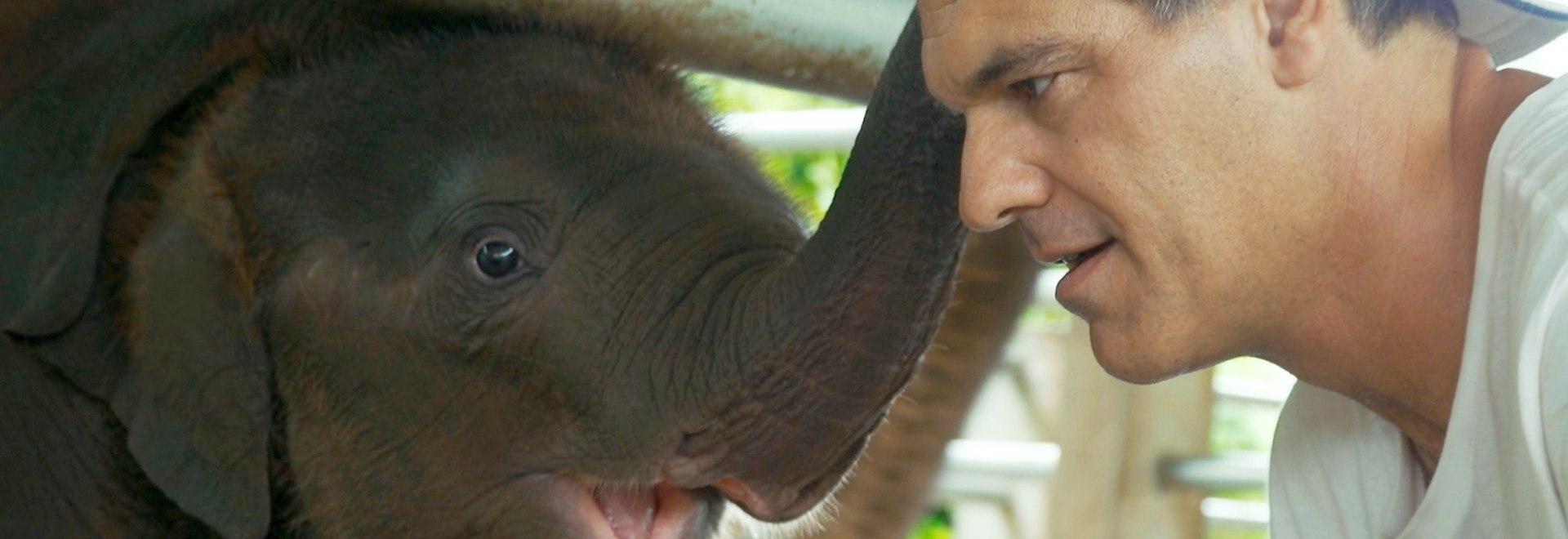 Wild Frank: ritorno in Thailandia