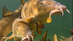 Pasturare pesante in acque profonde