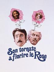 Son tornate a fiorire le rose