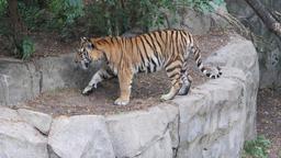 L'attesa dello zoo