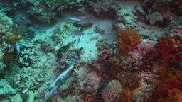 I grandi oceani selvaggi