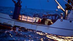 Avvelenati in mare