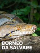 Borneo da salvare