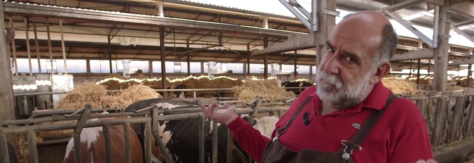 Formaggio di capra