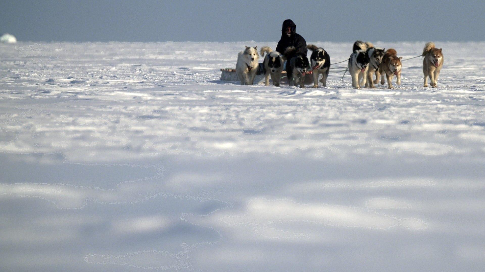 Sky Nature HD I segreti dell'Artide