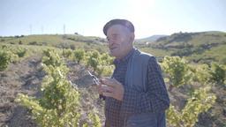 Il Mandrolisai e i vini della longevità