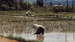 Papua: paradiso perduto
