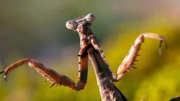 I mangiatori di insetti