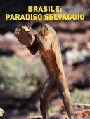 Brasile: paradiso selvaggio