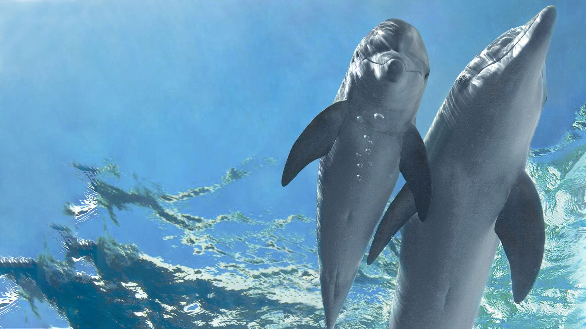 Premium Cinema 2 L'incredibile storia di Winter il delfino 2
