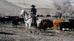 A tu per tu con un cavallo selvaggio
