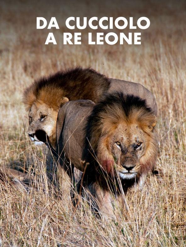 Da cucciolo a Re Leone
